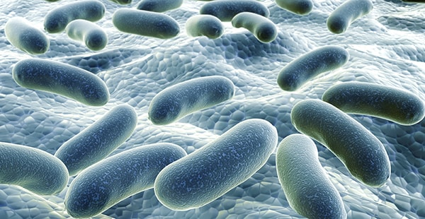Bacteria on a surface